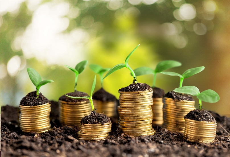 Accounts. Golden coins in soil with young plant isolated. Money